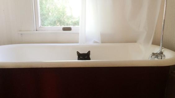 Cat in a tub.