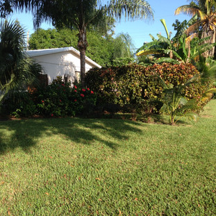 Beautiful Lawn After Mixin Green
