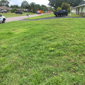 Ugly Lawn Before Mixin Green