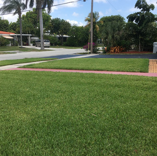 Beautiful lawn treated by Mixin Green