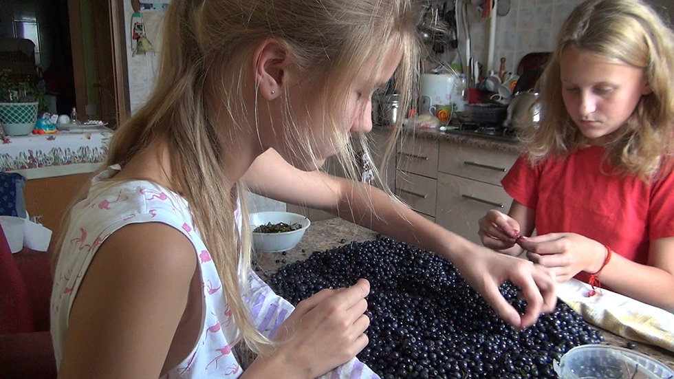 Video: Blueberries from Village and Nastya