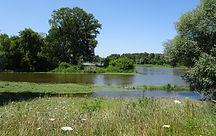 Loire et rio avec forêt alluviale.JPG