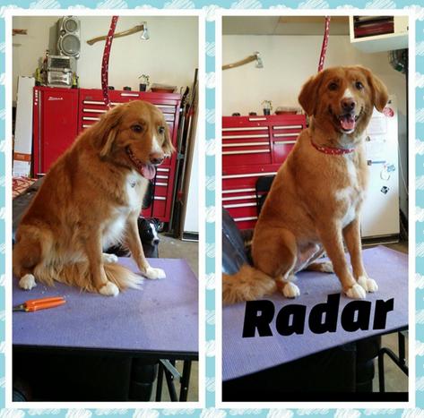 Big Red Dog Grooming