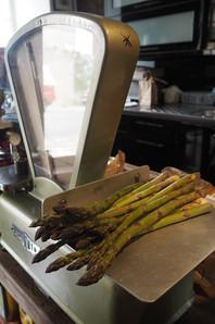 Saison des asperges vertes de l'Aude