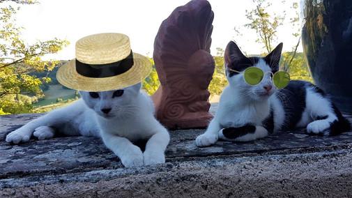 En plein soleil respect des consignes de la vétérinaire