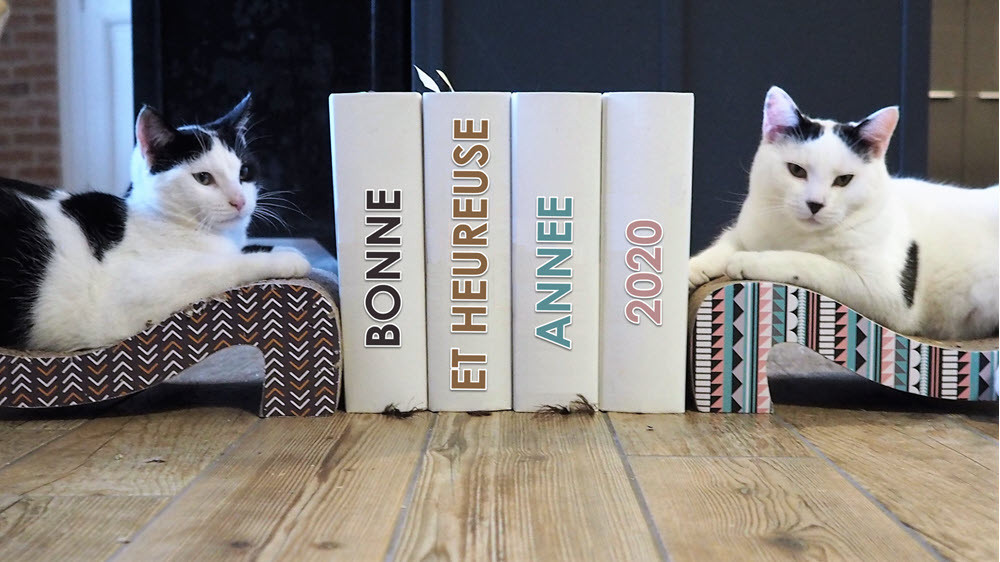 Les deux chats Felix et Junior vous souhaitent une bonne  année 2020