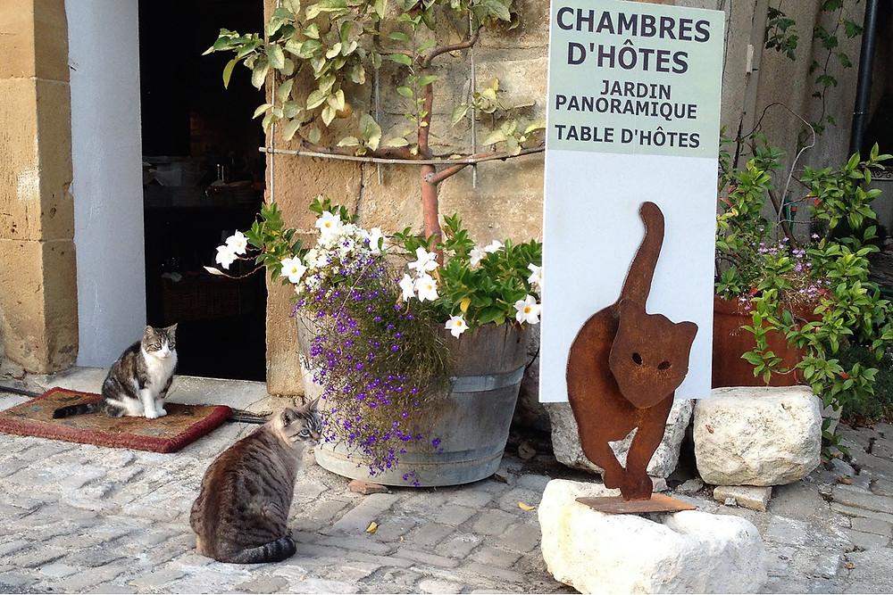 Fifine & Dino attendent nos hôtes devant la porte du Secret du Chat maison d'hôtes à la bastide de Cordes sur ciel