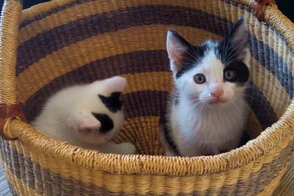 Chats cachés dans le panier