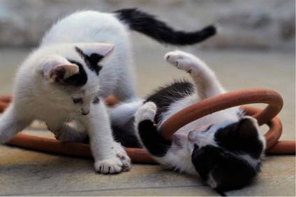 Jeux de chats avec un tuyau