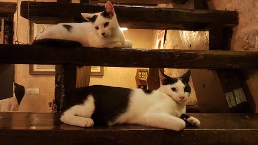 Les chats surveillent l'escalier