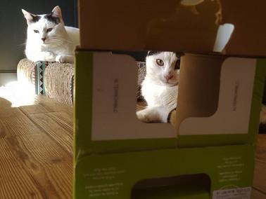 Chats à cache cache