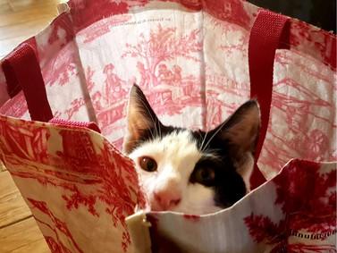 rien de mieux qu'un sac pour se cacher