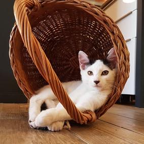Panier très confortable pour un chat