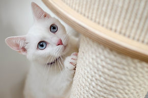 Cat scratching post - TassieCat