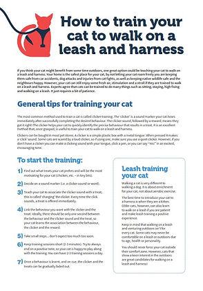 Leash training guide - TassieCat