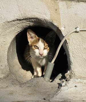 The Issues around stray Cats - TassieCat