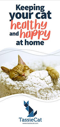 Keeping your cat healthy and happy at home - TassieCat