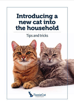 Introducing a new cat factsheet - TassieCat