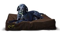 dog mattress brown