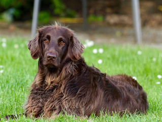 We know dog as man (or woman's) best friend, but it's now official as according to latest research o