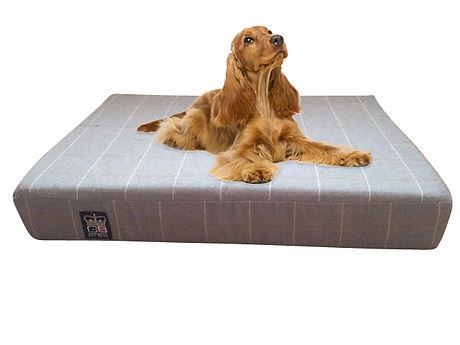 bamburgh gold dog slab.jpg