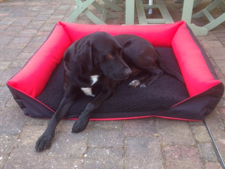 Fleece Topped Dog Sofa Launched