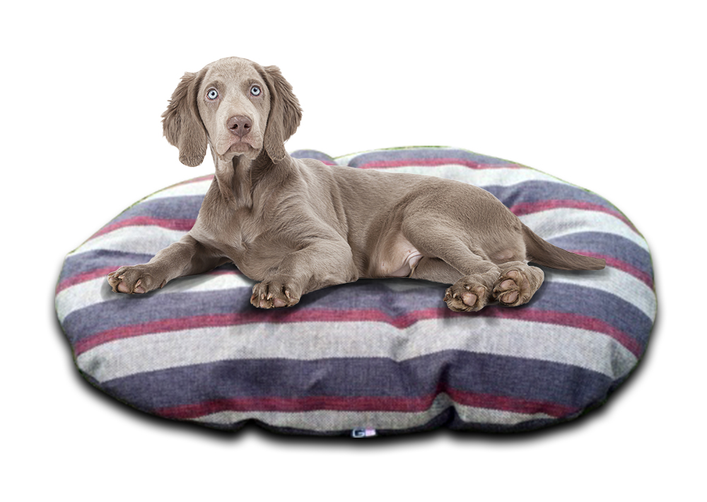 granite Stripe oval cushion with dog uk