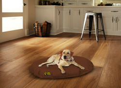 dog on brown oval bed with background
