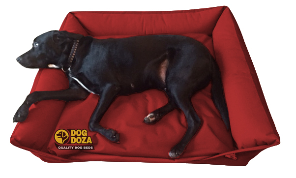 red sofa dog bed
