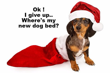 Christmas Dog Beds Xmas Dog Beds Festive Pet Beds UK
