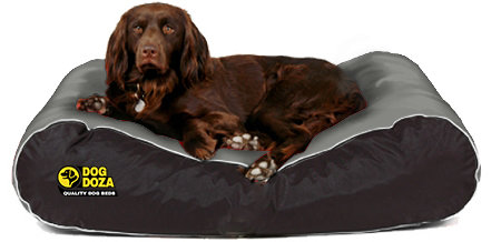 Dog Doza Active Style Waterproof Various Sizes - Colours