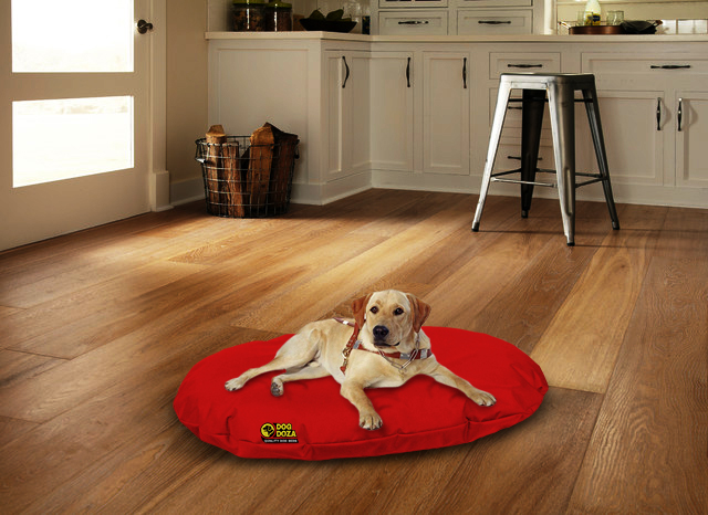 dog on red oval bed with background