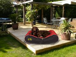 Dog Doza Active Style Box Border Bed