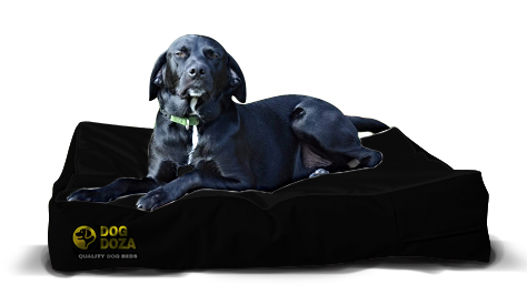 dog mattress black