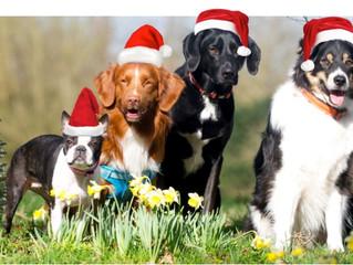 Christmas Dog Beds Collection