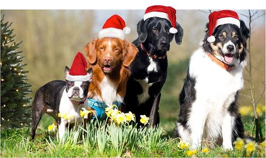 Christmas Sale Dog Beds UK Xmas Pet Beds