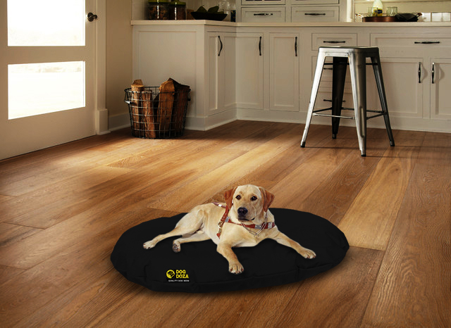dog on black oval bed with background