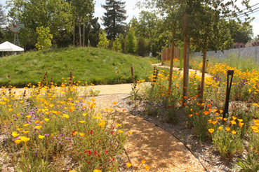 There is always something in bloom throughout this pollinator-friendly landscape.