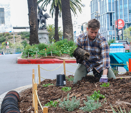 Volunteer planting at the Dolores Pollinator Blvd
