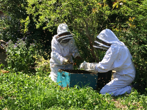 Beekeeping at the Algarden