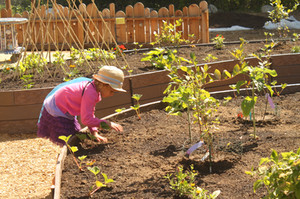 """Children grow, harvest, and  """"sell"""" fruits & veggies at the Farm Stand."""