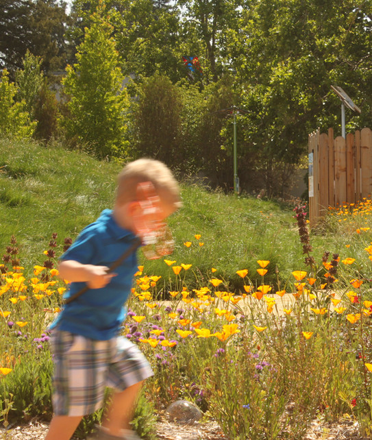 Vibrant, colorful gardens invite energetic play.
