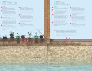 Dolores Pollinator Blvd: Soil-Regeneration