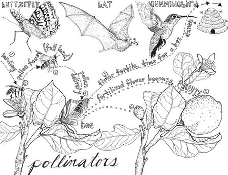 Coloring Book: Pollinators