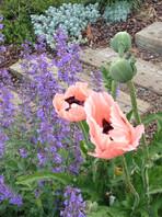 Sutter's Garden