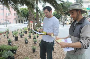 Sutter & Benjamin: Planting layout