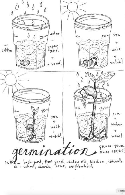 Coloring Book: Germination