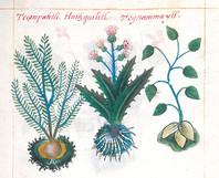 Sacred-Mtn-Cover-Plants.jpg