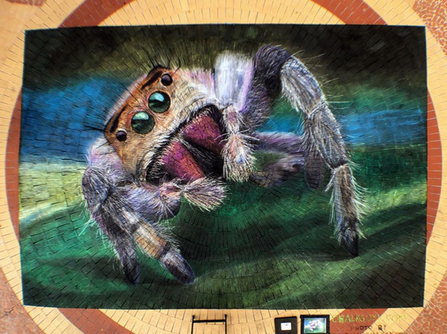 Female Jumping Spider