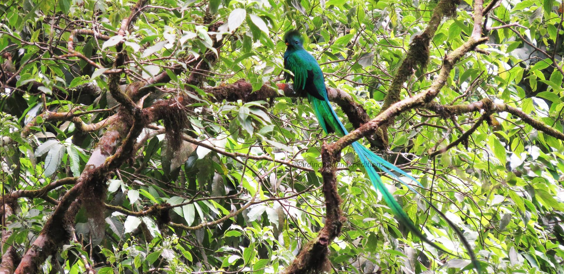 Quetzal 5.jpg